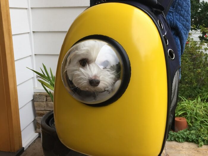 Bubble Pet Carrier