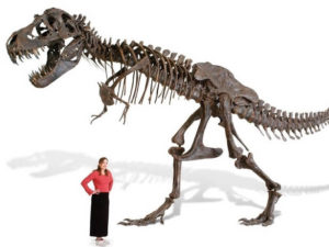 Full-size-T-Rex-skeleton-replica