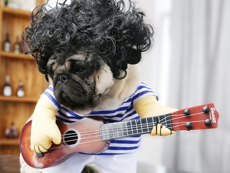 Guitar Dog Costume